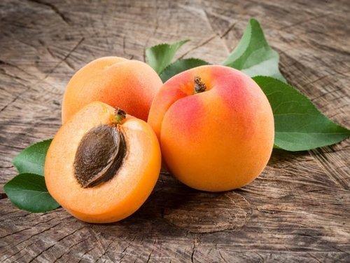 Сорт абрикос